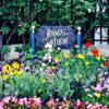 USJの癒しスポットのバラ園「Roses of Fame」は5月中旬からが見頃☆