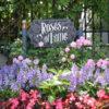 USJバラ園「Roses of Fame」は今が見頃!2018年のレポート